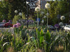 Thumbnail 2 - Alden Park - Roofmeadow - Green roofs. For good.
