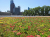Thumbnail 4 - The Barnes Foundation - Roofmeadow - Green roofs. For good.