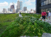 Thumbnail 2 - PECO Main Office Building - Roofmeadow - Green roofs. For good.