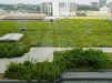 Thumbnail 3 - PECO Main Office Building - Roofmeadow - Green roofs. For good.