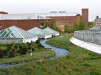 Thumbnail 3 - University of Virginia Hospital - Roofmeadow - Green roofs. For good.